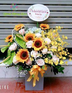 hoa huong duong cho ngay khai truong