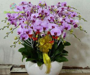 hình ảnh hoa lan chưng tết