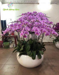 hình ảnh hoa lan tím