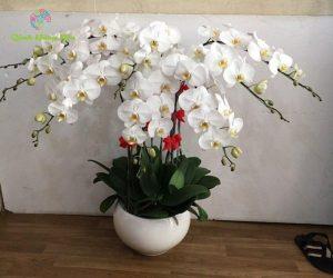 hình ảnh hoa lan trắng