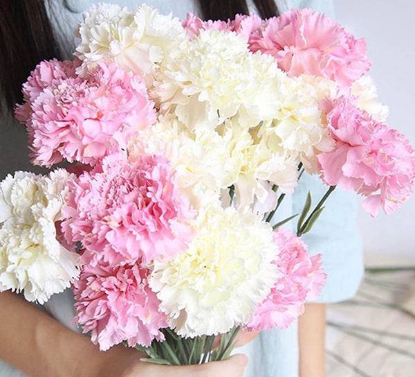 Mẫu hoa cẩm chướng sức khỏe