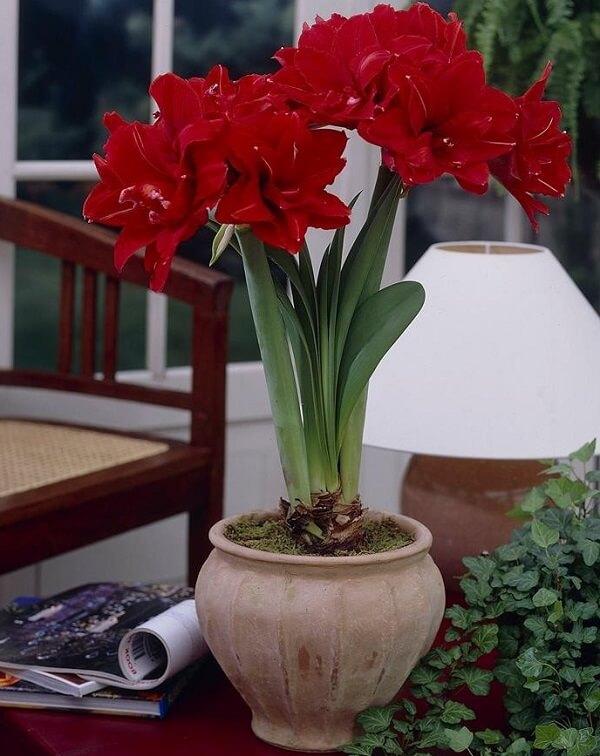 Cách căm hoa huệ đỏ chưng bàn thờ