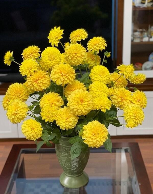 Mẫu hoa cúc chưng tết ý nghĩa