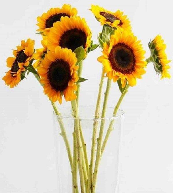 Hoa hướng dương trong cuộc sống